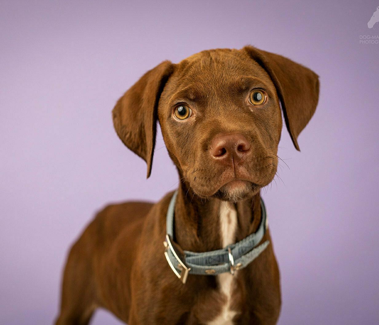 הסבר וטרינר על חרדת נטישה אצל כלבים