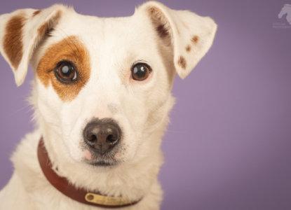 חיסונים לגורי כלבים