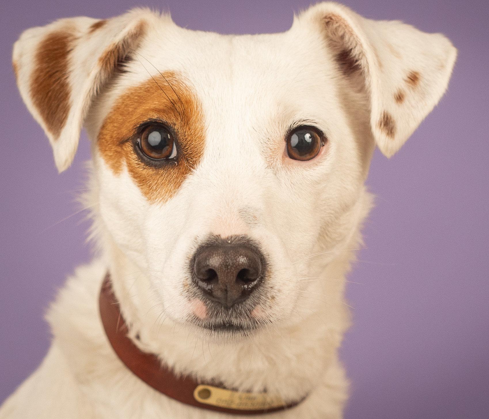 חיסונים לגורים - מתן חיסונים לגורי כלבים