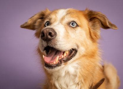 מה עושים אם הכלב בלע גוף זר - המלצות וטרינר
