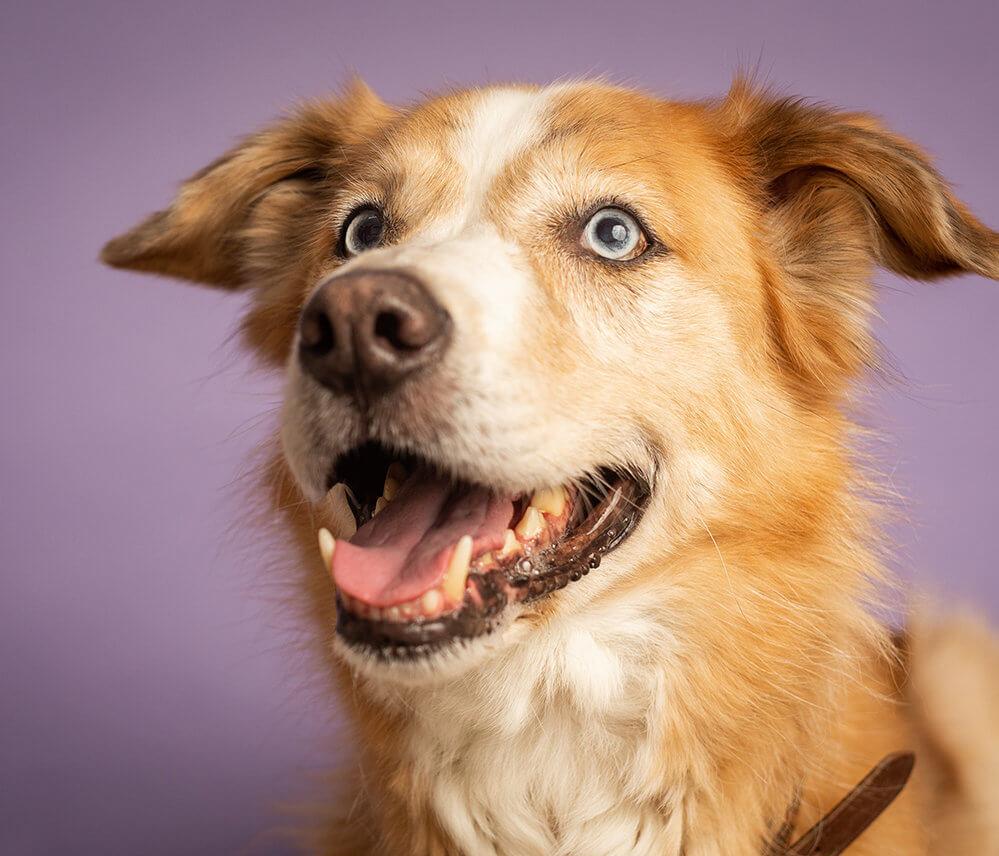 הכלב אכל לי את השיעורים - בליעת גוף זר אצל כלבים וחתולים
