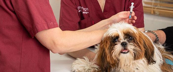 מדוע חשוב לתת חיסון לכלב