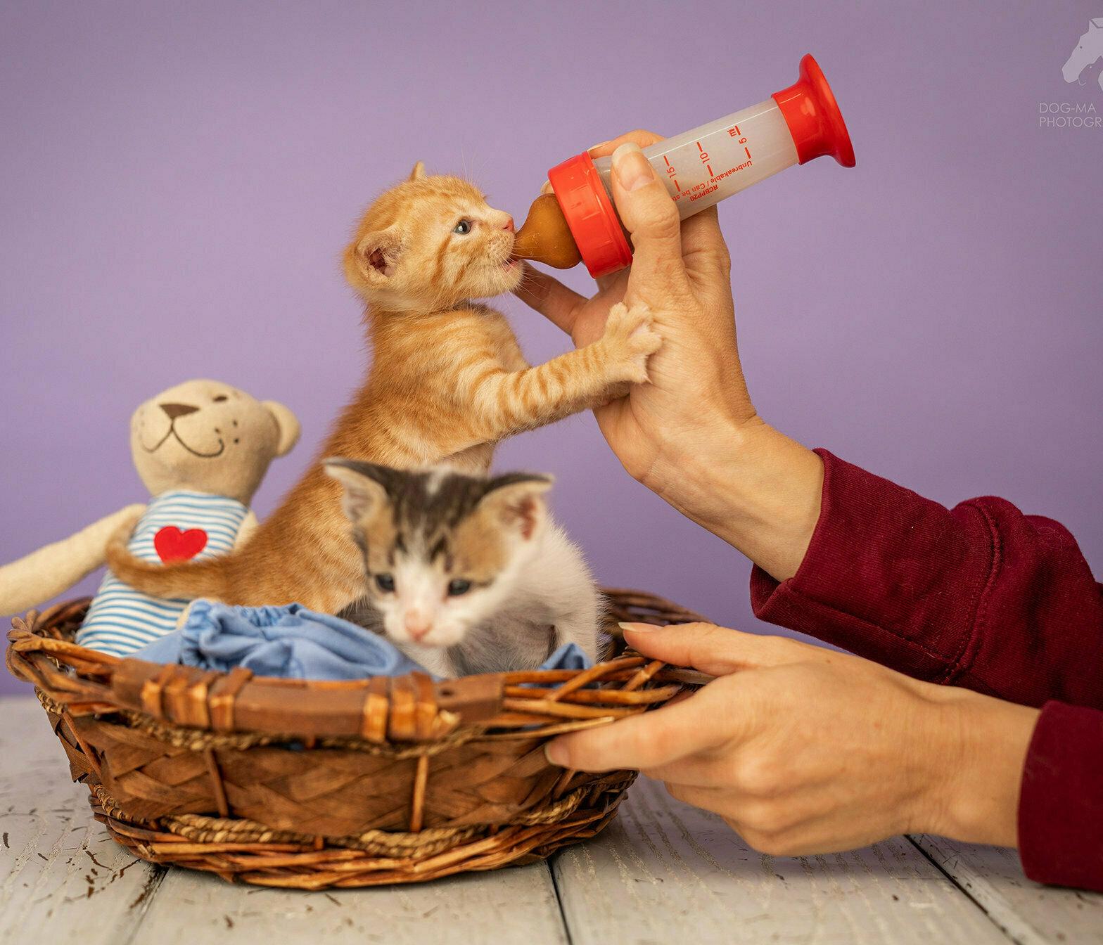 המלצות וטרינר לטיפול בחתלתולים שננטשו