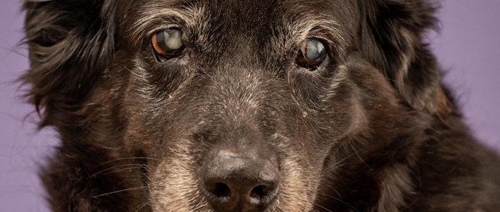 סניליות בכלבים ובחתולים מבוגרים - וטרינר הקליניקה מסביר