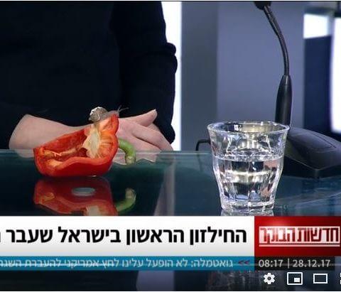 השתלת קונכיה לחילזון במרפאה וטרינרית בתל אביב